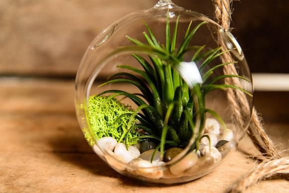 S Sealed Glass Bowl For Flower Arrangements