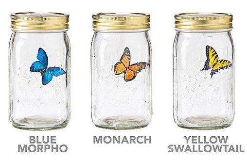 animated butterfly in jar type - blue, monarch, yellow tail