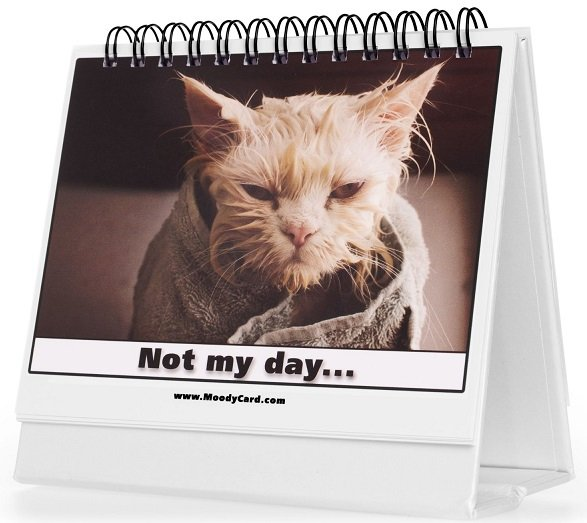 """moody card rolodex with """"I'm not amused"""" cat"""
