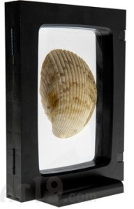 z access 3d display frame with sea shell decoration