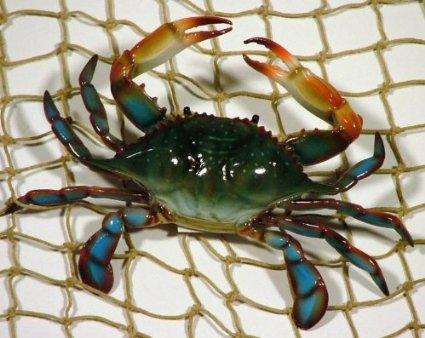 6-inch-maryland-blue-crab-set-of-3-beach-tiki-bar-wall-decor