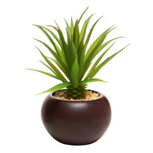 tall mini succulent in attractive brown pot