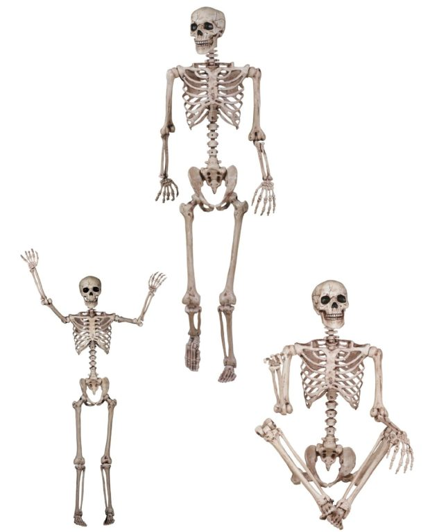 poseable-human-skeleton