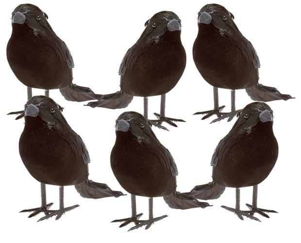 murder of halloween crows