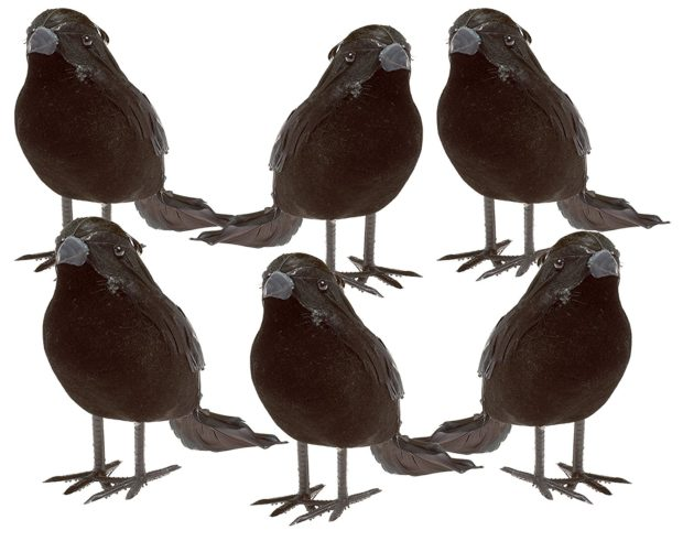 murder of halloween crows
